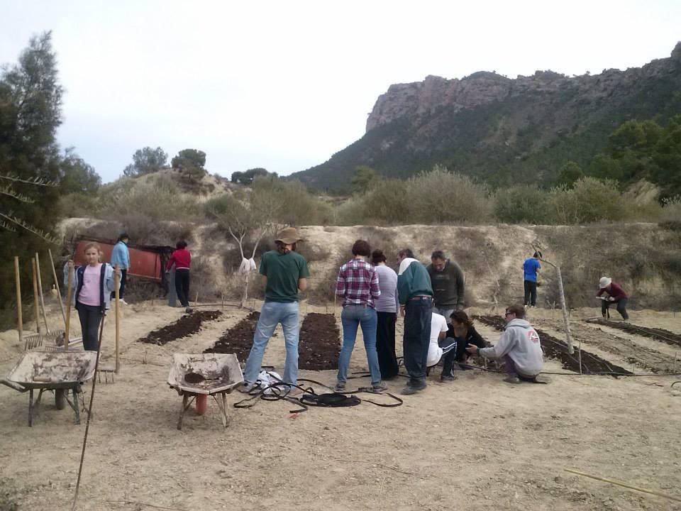 huerto0081 - Huertos Solidarios en Fuente de Columbares