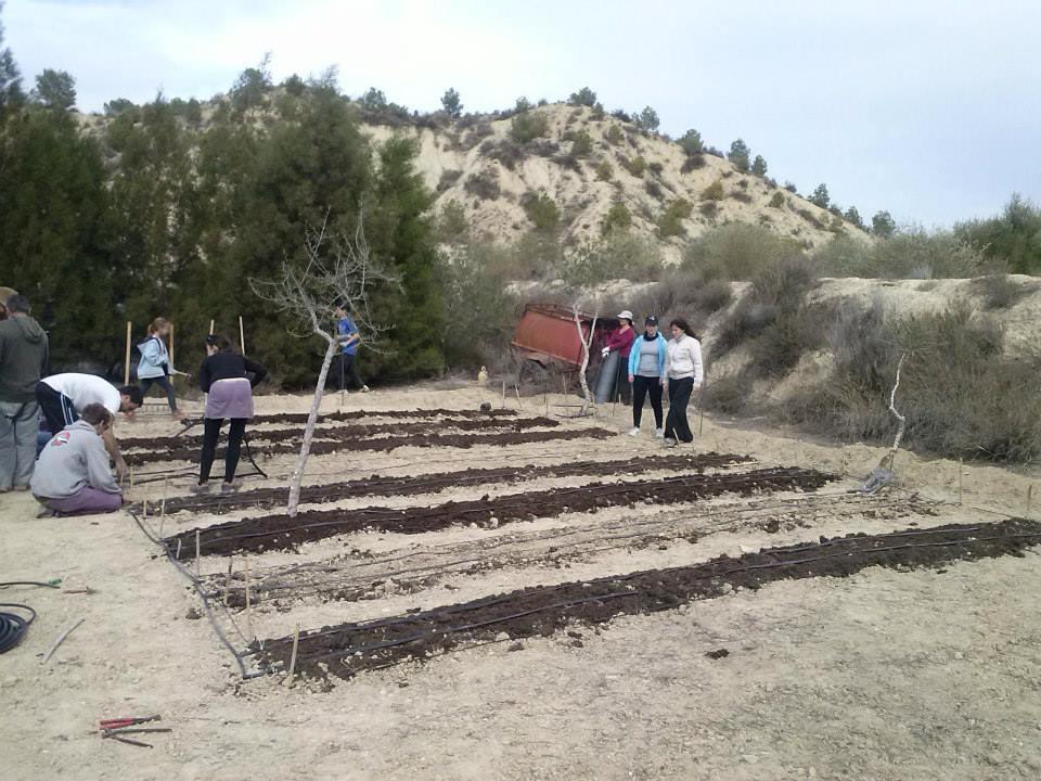 huerto010 - Huertos Solidarios en Fuente de Columbares
