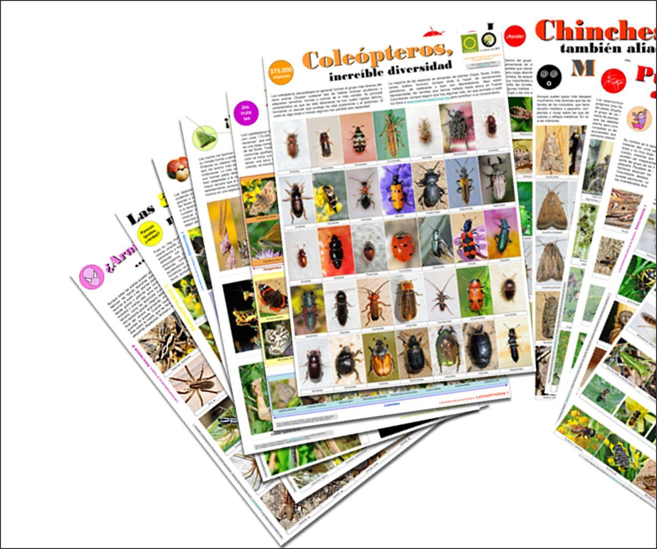 bichos - Donaciones Láminas Insectos