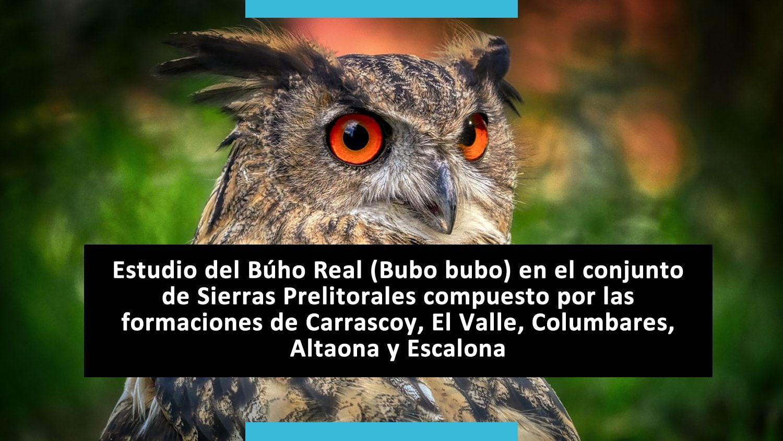 Bubo bubo - Conocimiento y defensa de la Biodiversidad