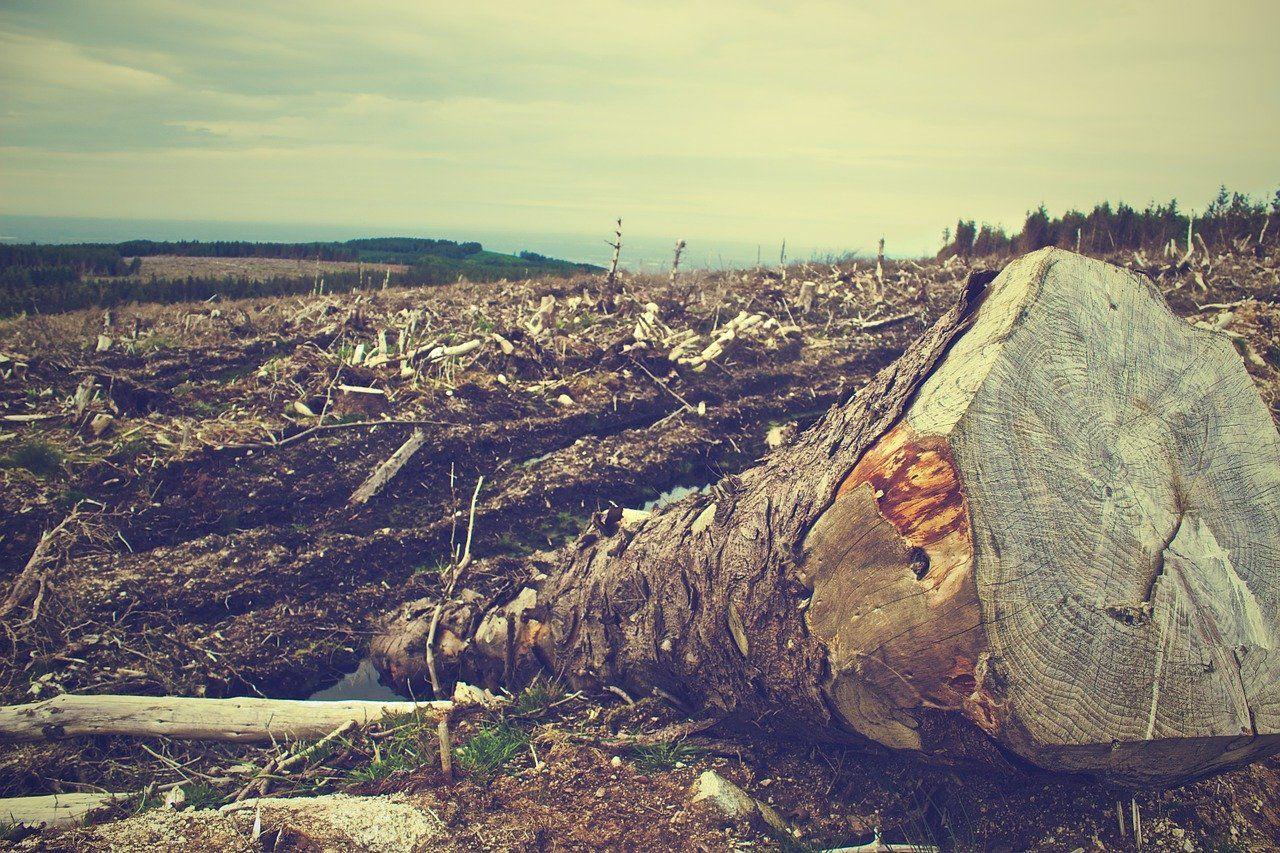 deforestation 405749 1280 - Uso sostenible de los Recursos Naturales