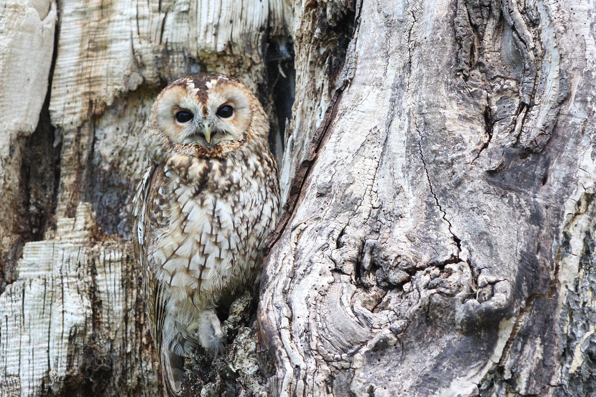 owl 1576572 1920 - Conocimiento y defensa de la Biodiversidad