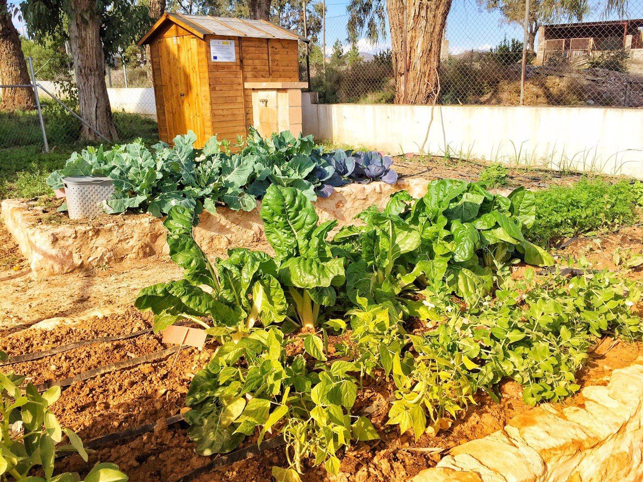 photo5384203734667603707 - Red Rural de Huertos Escolares
