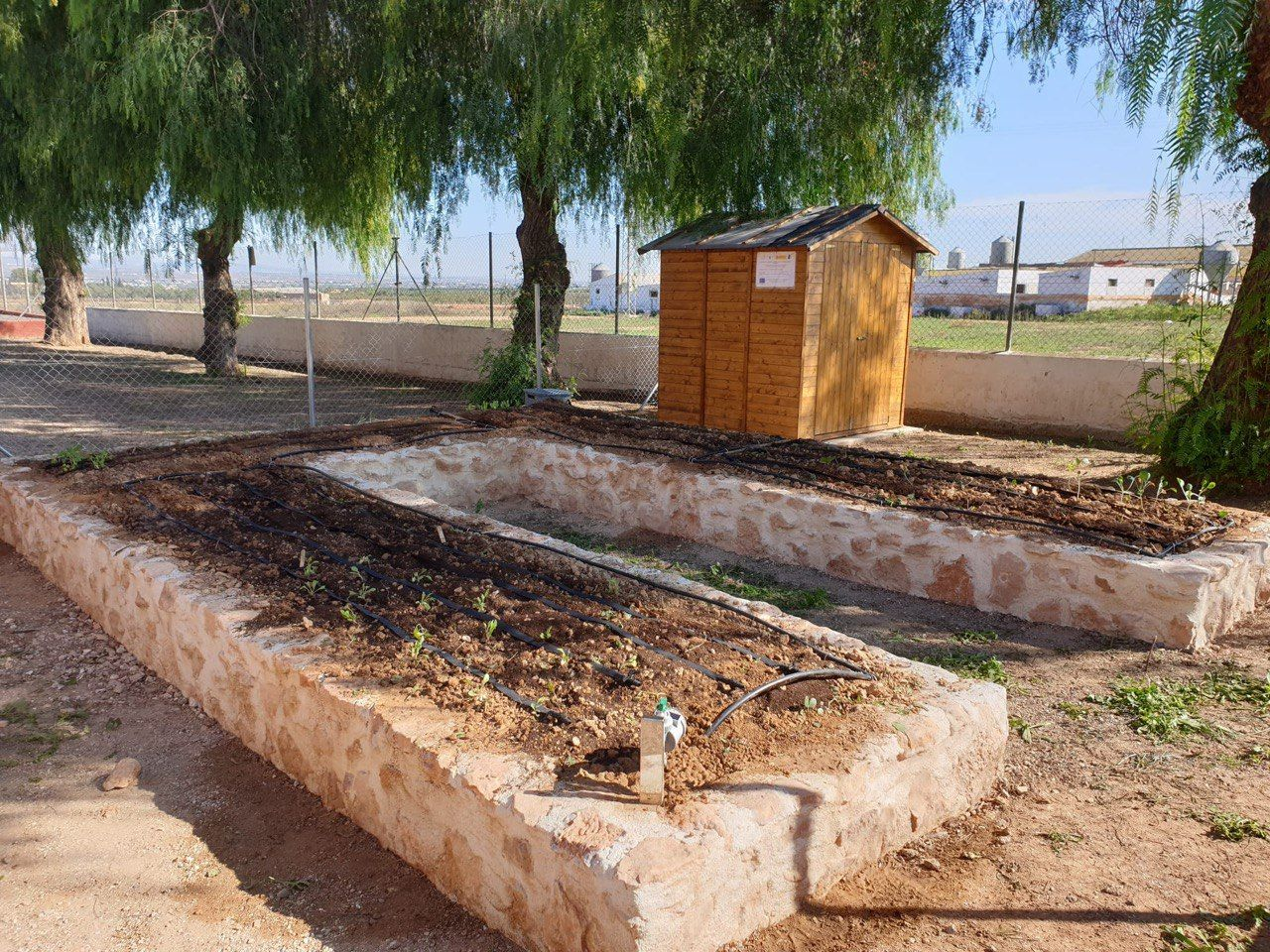 photo5384203734667603711 1 - Red Rural de Huertos Escolares