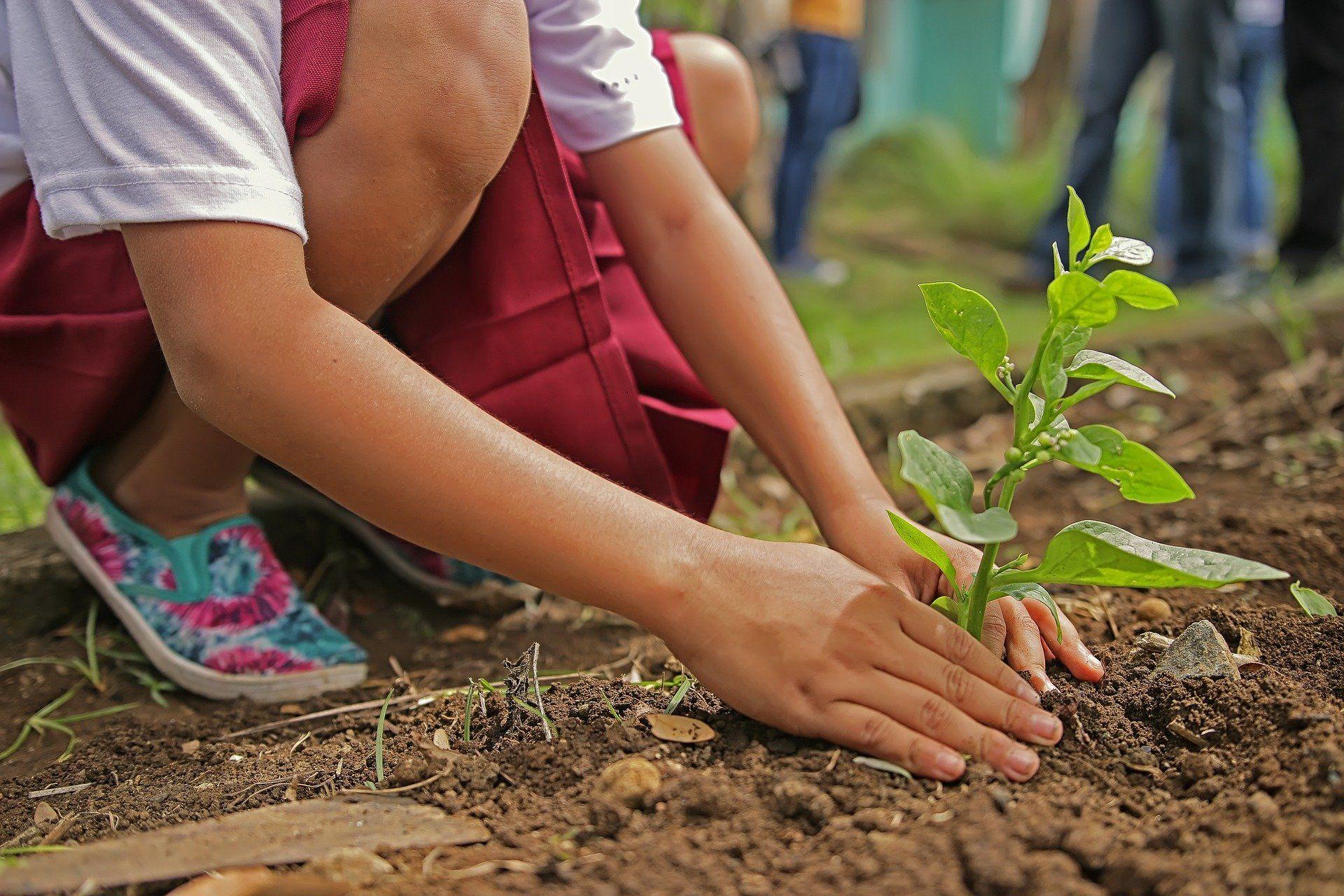planting 1898946 1920 - Campañas Locales de Defensa del Medio Natural